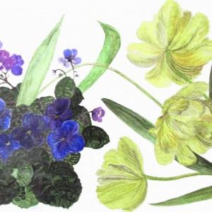 Tulpen und Usambara, 41x34cm