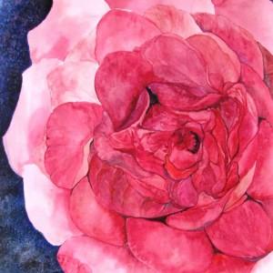 Rose, 50x40 cm