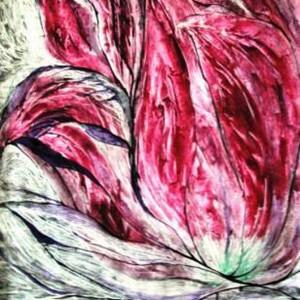 Drama Tulpe, 70x100 cm